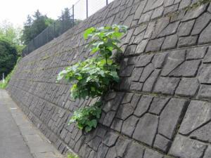 ブロック塀から
