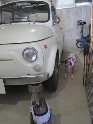 犬inガレージ